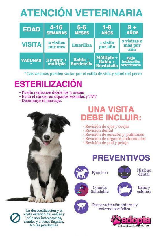 Cuidados y educacion para su perro