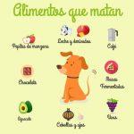 Galeria de fotos de cuidados para tu mascota