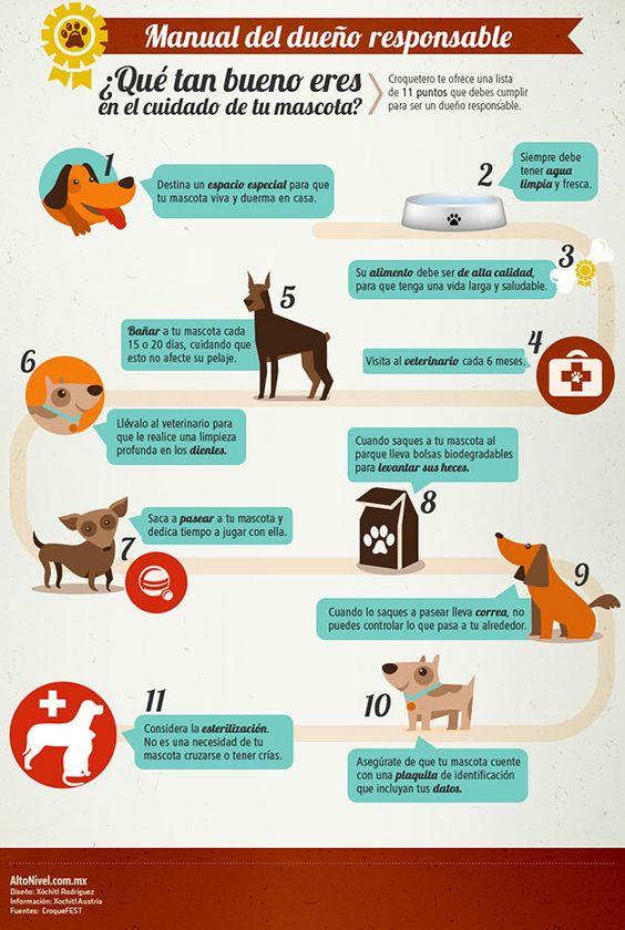 Que cuidados especiales deben recibir una mascota