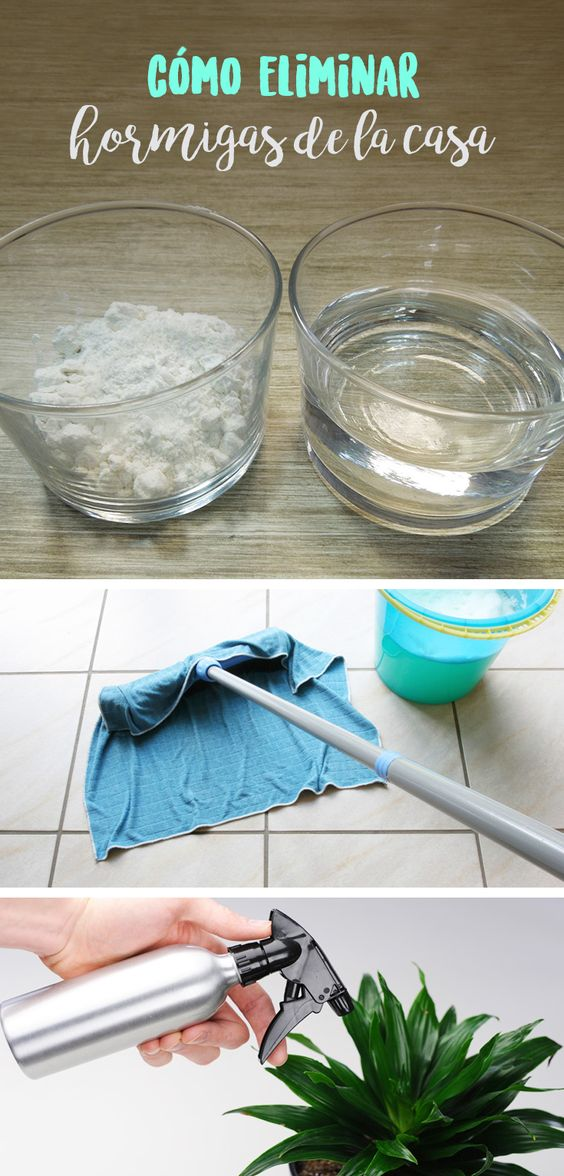 Como eliminar las hormigas de tu casa f cil y r pido - Como eliminar hormigas ...
