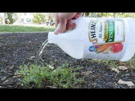 Como eliminar las hormigas de tu casa f cil y r pido - Como acabar con las hormigas en el jardin ...