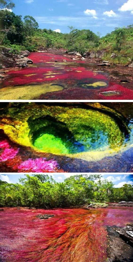 cano cristales colombia