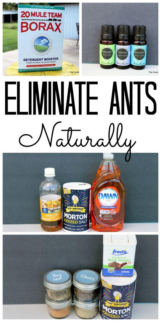 Como eliminar las hormigas de tu casa f cil y r pido for Eliminar hormigas del jardin