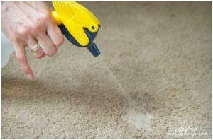 como eliminar pipi de perro de la alfombra