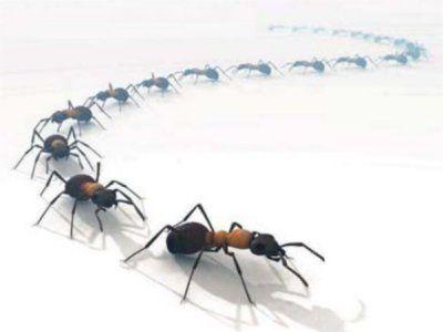 Como eliminar las hormigas de tu casa