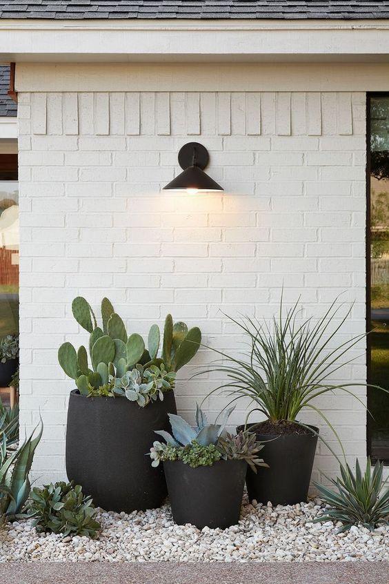 plantas deserticas de poco mantenimiento