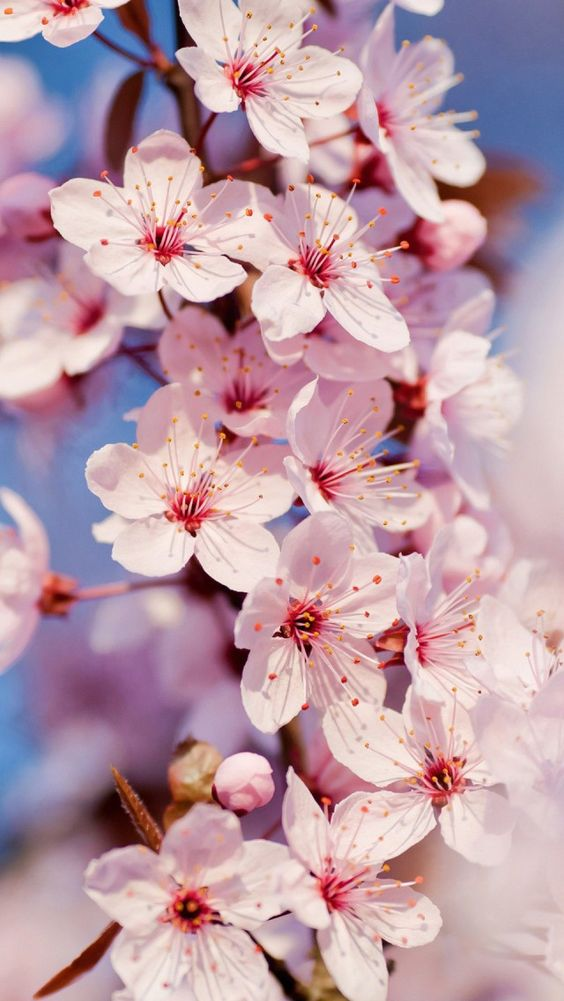 Fondos de primavera
