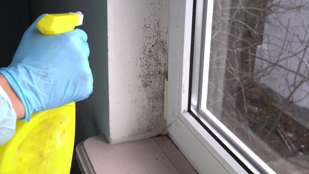 Como eliminar el moho de los techos