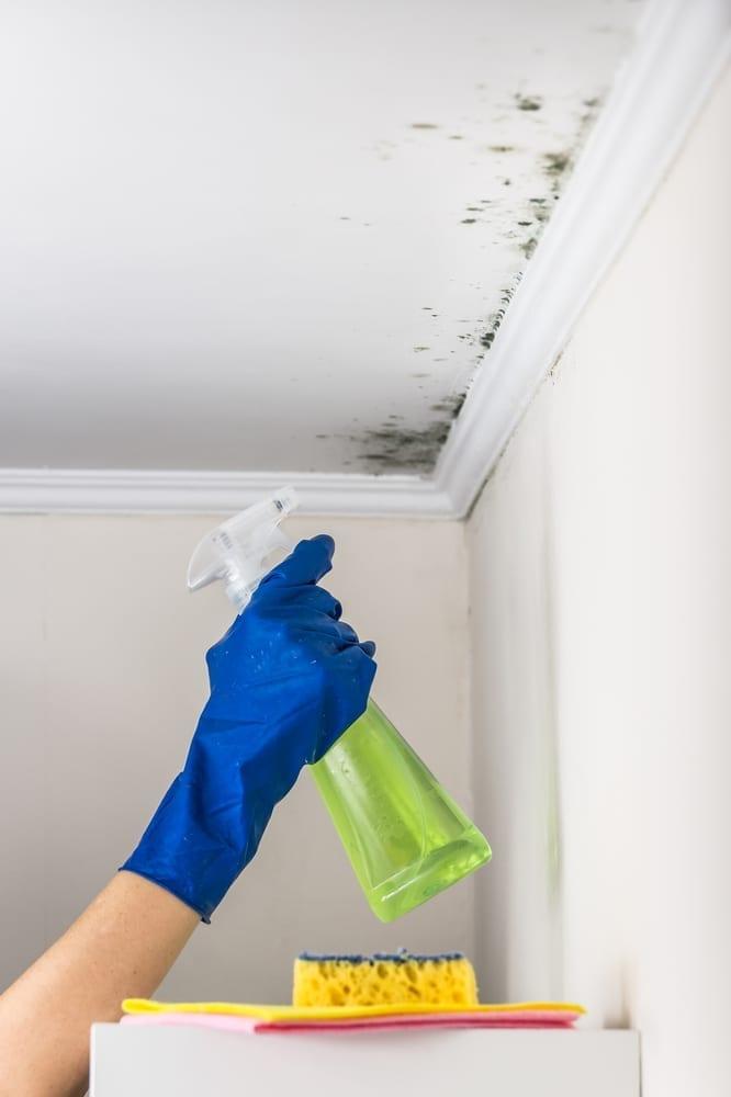 Cómo eliminar el moho y hongos de muebles, paredes y techos