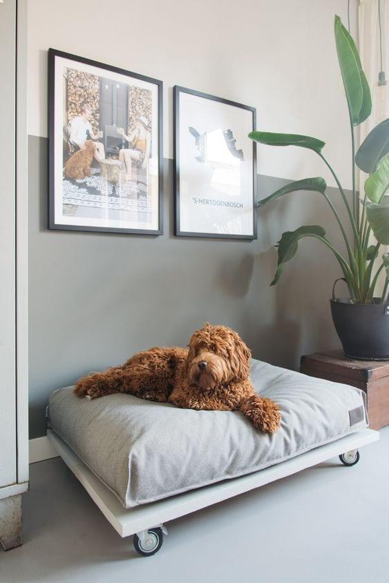 Cuidados con las mascotas de la casa