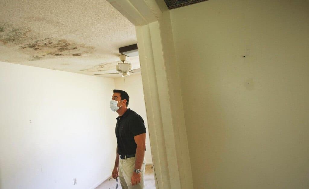 Daños que puede ocasionar el moho en las paredes