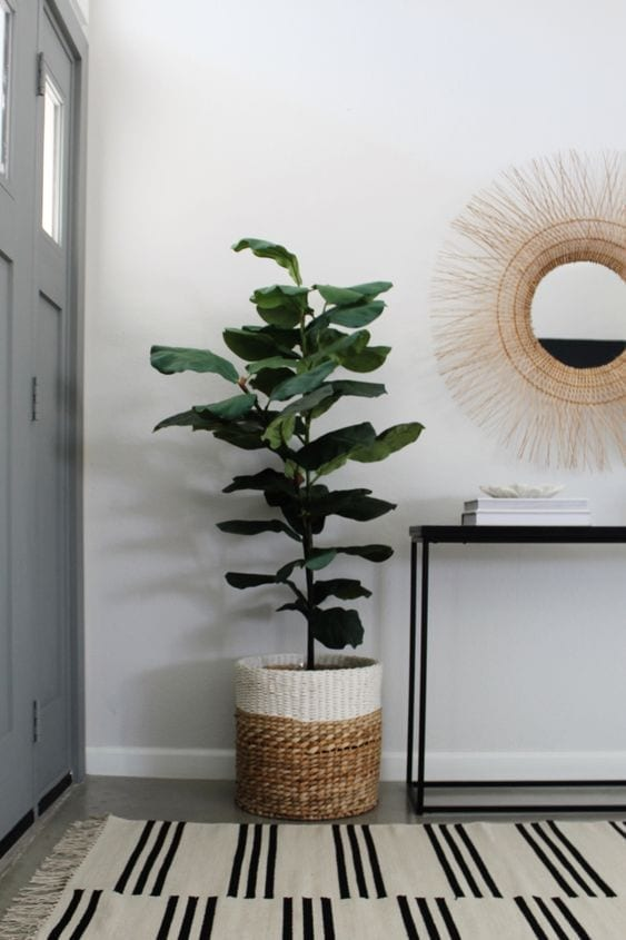 Ideas para decorar un recibidor con plantas