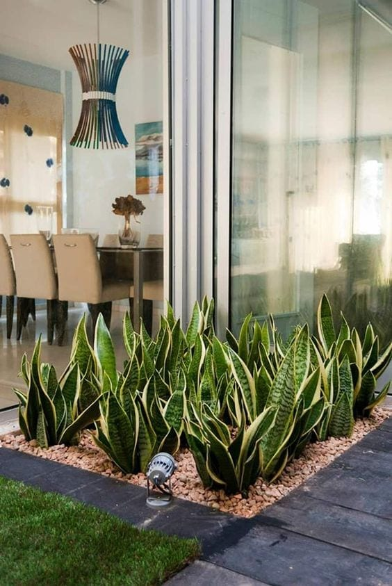 Plantas de sombra, perfectas para un jardín con poca luz