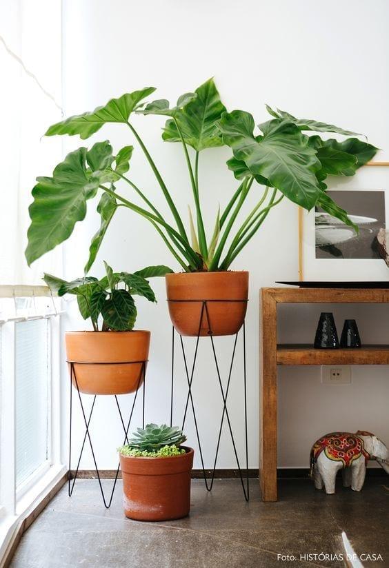 Plantas para purificar tu hogar