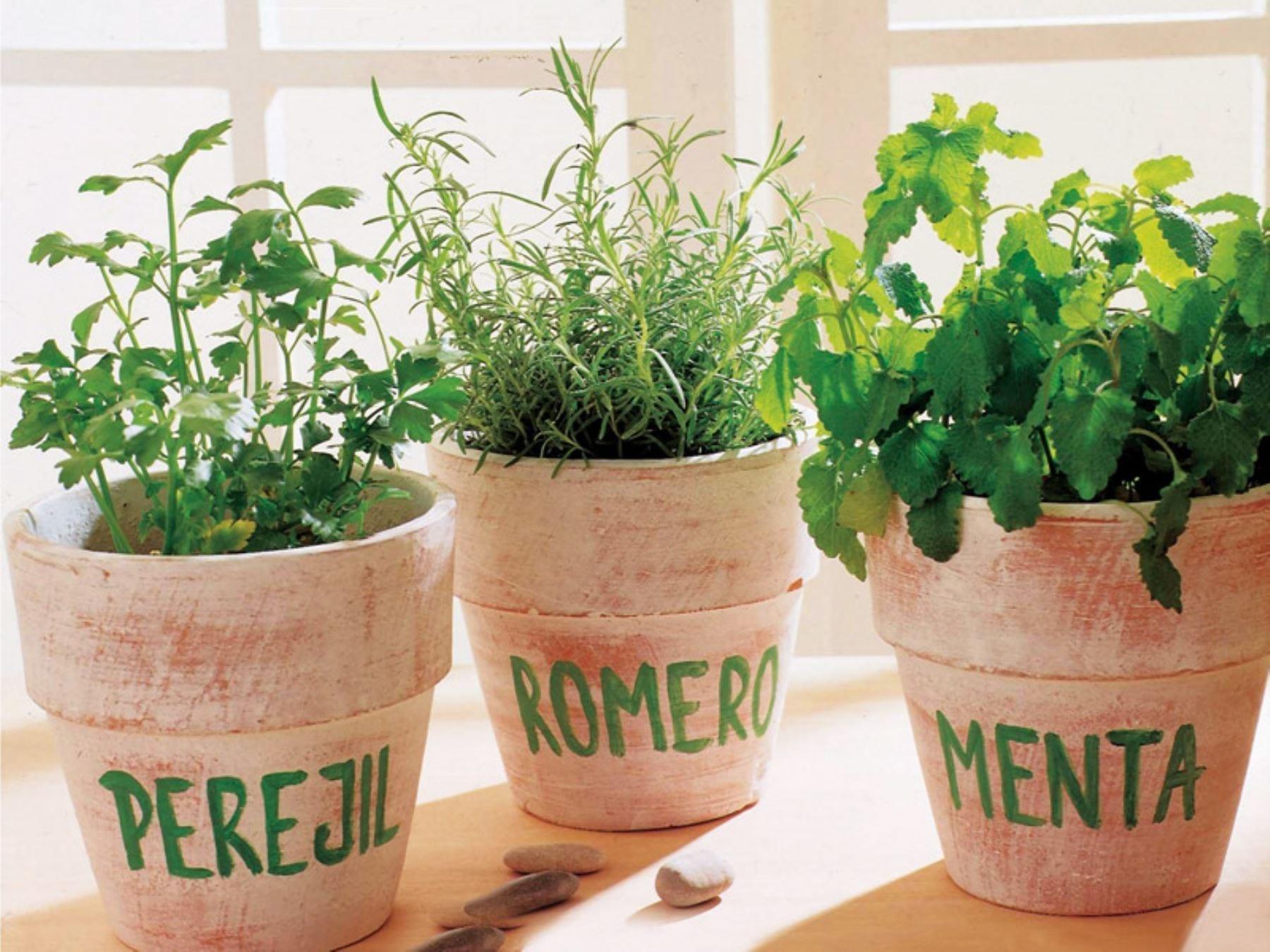 Plantas que te ayudarán a repeler naturalmente los insectos