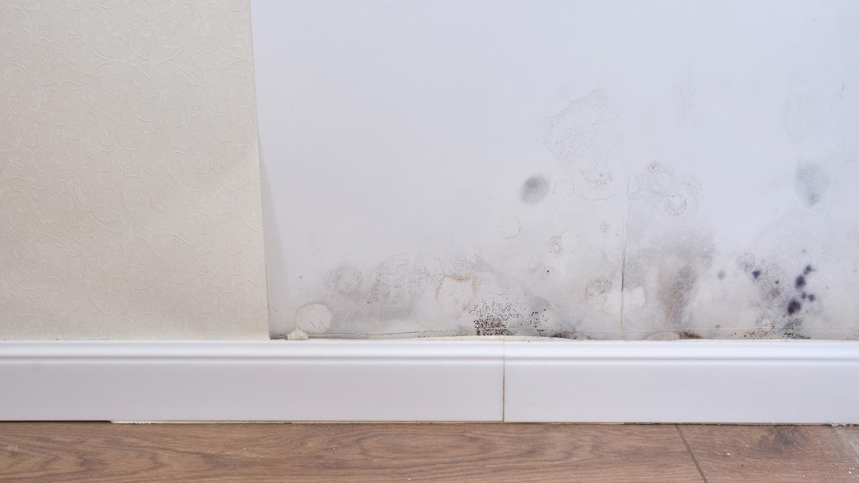¿Porque sale moho en las paredes?