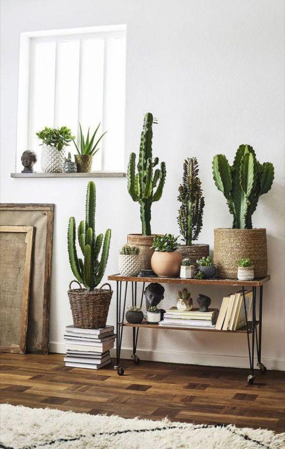 Cactus para interiores