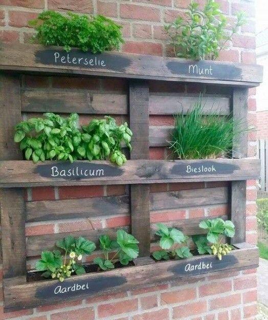 Cómo crear un huerto aromático con cajas de madera