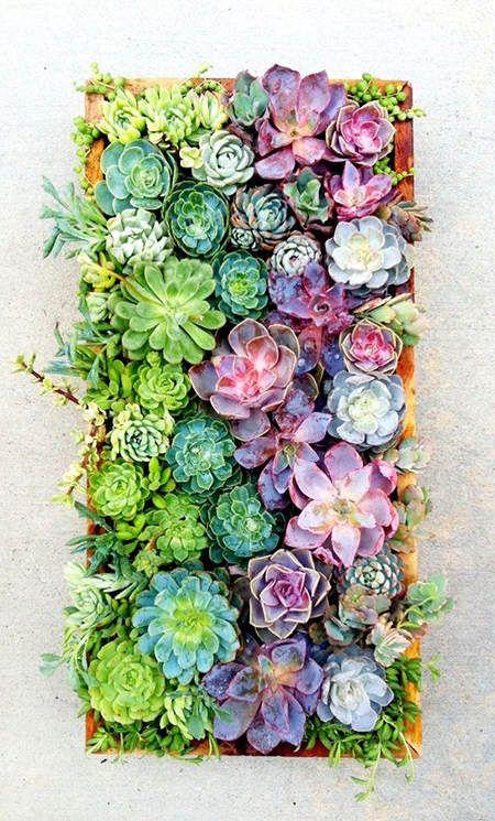 Ideas para decorar con suculentas