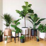 Plantas para interiores que no se te morirán fácilmente