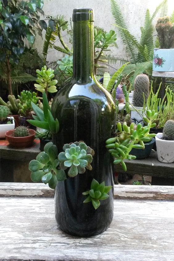 Suculentas en botellas de cristal