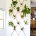 Paredes decoradas con plantas