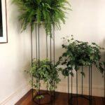 Plantas que absorben el calor y refrescan tu casa