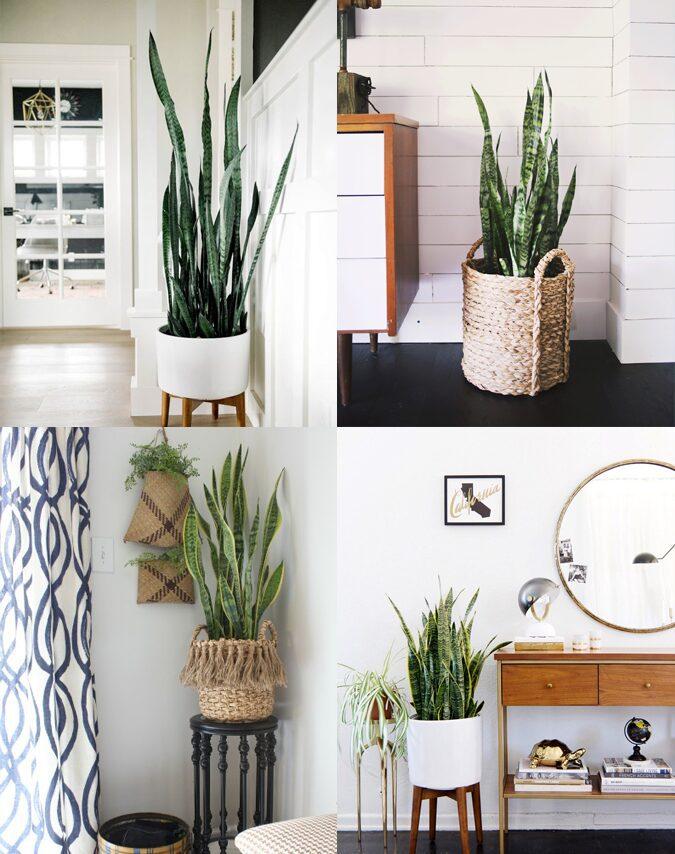 Decoración con plantas para salas de estar